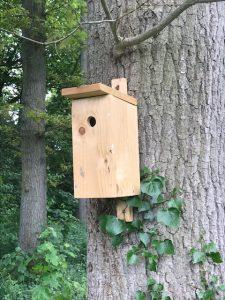 Met nestkastjes kan je op een natuurlijke manier de eikenprocessierups bestrijden
