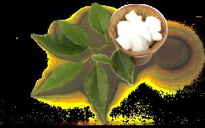 Kamfer; ingrediënt van eikenprocessierups lotion